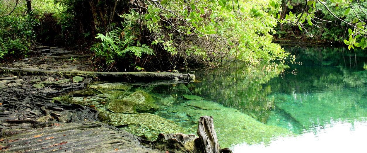 Blog_0002_Cenote Xcacelito