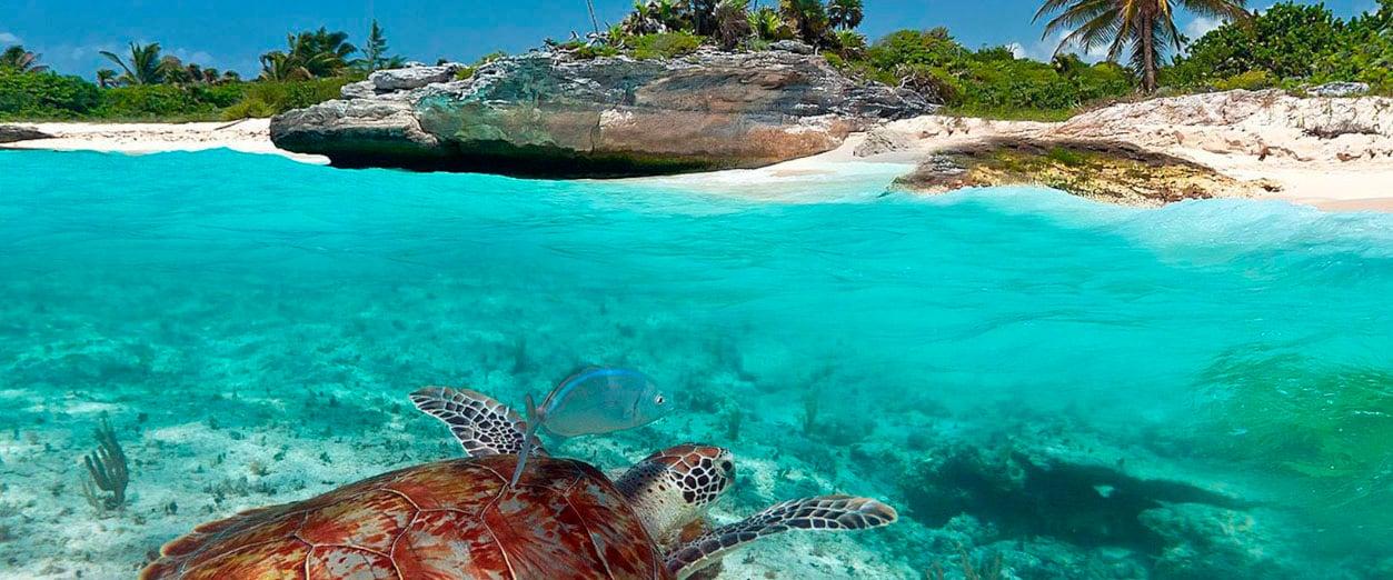 Atracciones-Blog_0002_Santuario de la Tortuga Marina Xcacel-Xcacelito