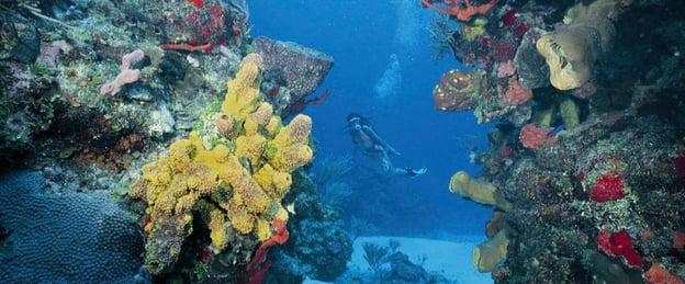 Atracciones-Blog_0011_Cueva de los Tiburones Durmientes