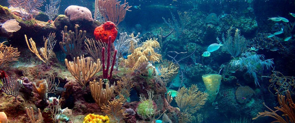 MarCaribe_0000_arrecife